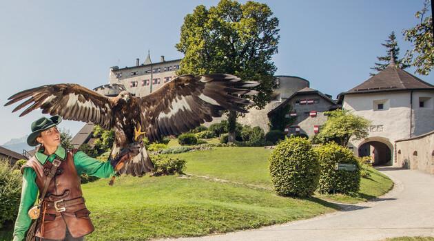 Falknerei mit Greifvogelschau auf Burg Hohenwerfen